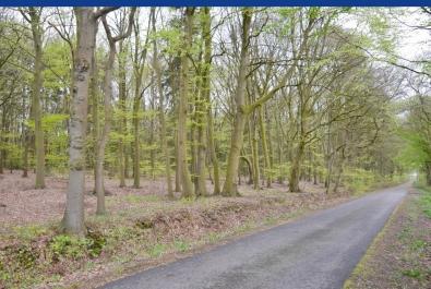 Schiffdorf-Geestenseth: Lust auf Natur pur im eigenen Wald?